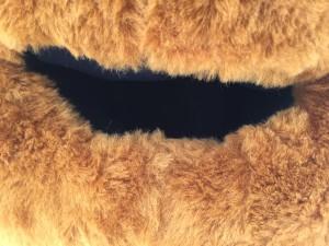 3p-Bären