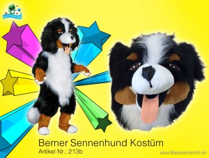 Berner-Sennenhund-kostuem-213b