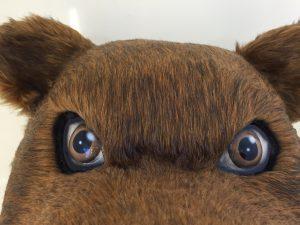Grizzly-Kostüme